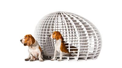 Convocan a diseñar casas para perros
